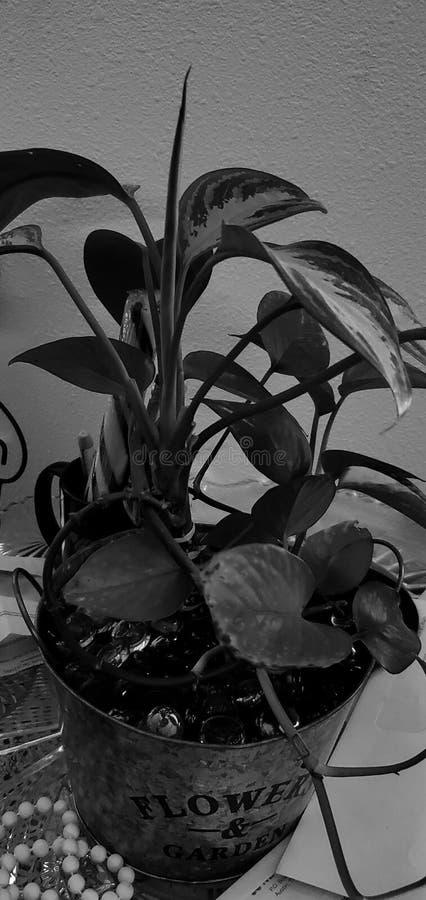 Het Indoorthug groene leven royalty-vrije stock afbeelding