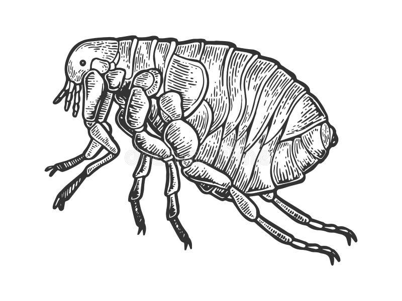 Het insect die van de vloluis vectorillustratie graveren stock illustratie