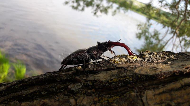 Het insect op boom royalty-vrije stock afbeelding