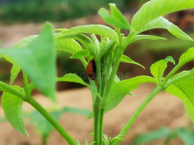Het insect op de boom royalty-vrije stock afbeelding