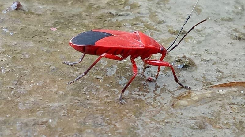 Het Insect van de fascinatieinstallatie stock foto