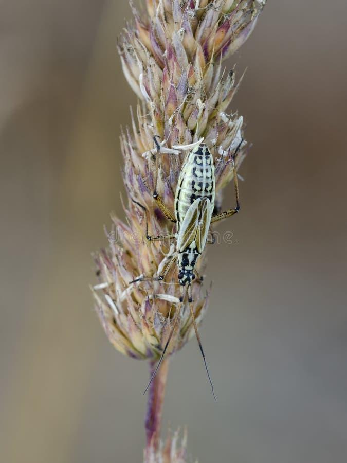 Het insect van de weideinstallatie op neiging royalty-vrije stock foto