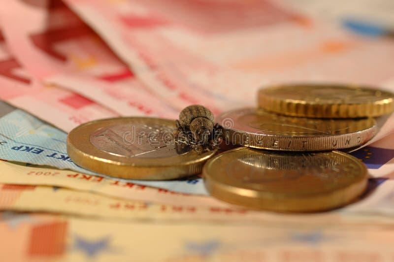 Het Insect Van Het Geld Stock Afbeeldingen