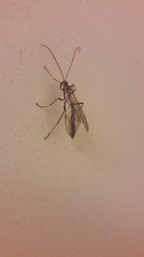 Het Insectenleven stock fotografie