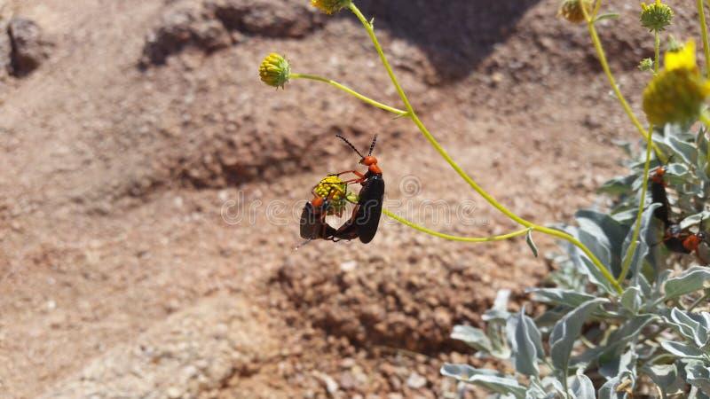 Het insectenleven in Arizona stock afbeeldingen