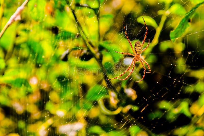 Het insectgeleedpotigen van insectenspinnen royalty-vrije stock afbeelding