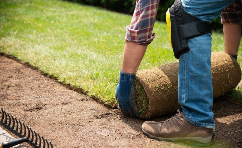 Het installeren van grasbroodjes in de tuin royalty-vrije stock afbeelding
