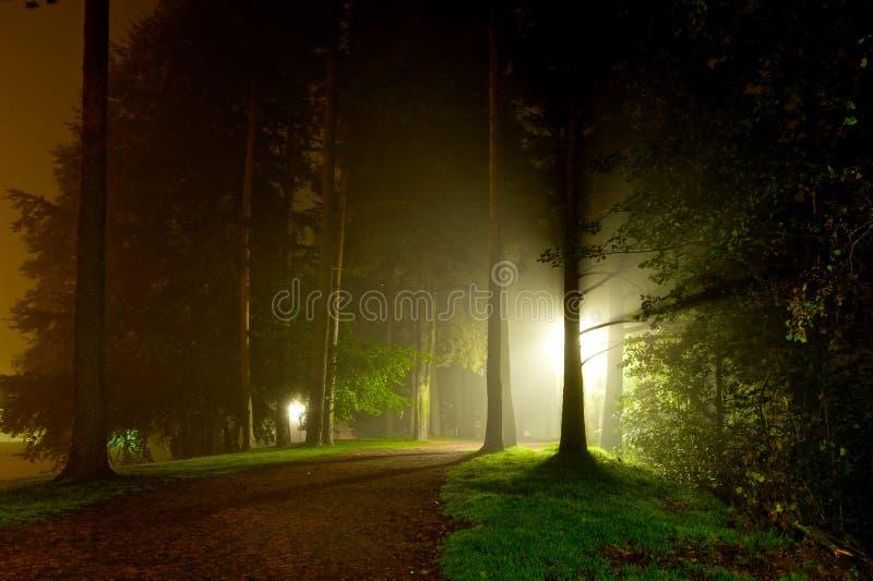 Het intense lichte glanzen door bomen stock afbeelding