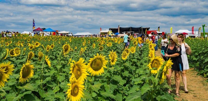Het jaarlijkse zonnebloemfestival in het Beaver Dam Farm royalty-vrije stock fotografie