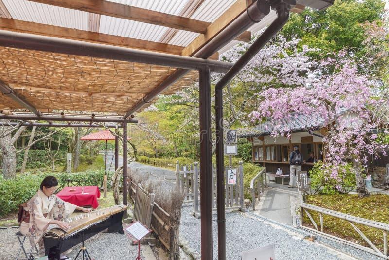 Het Japanse musican spelen Koto royalty-vrije stock afbeelding