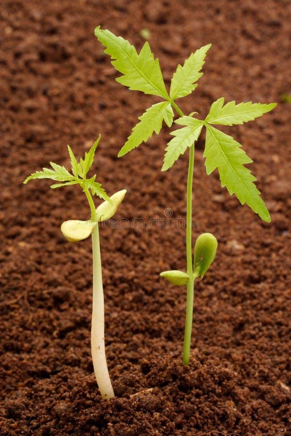 Het jong boompje-nieuwe leven twee stock fotografie
