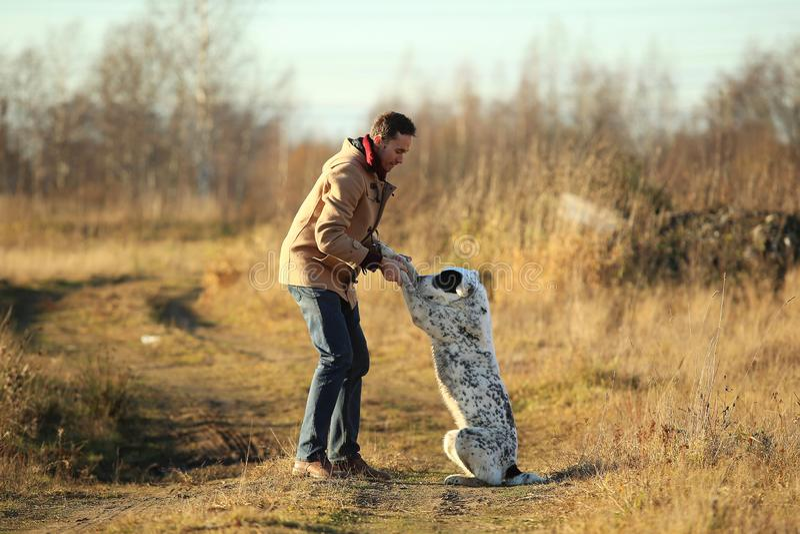 Het jonge gelukkige Europese glimlachen en het lachen lopen op een gebied met een grote witte hond royalty-vrije stock afbeelding