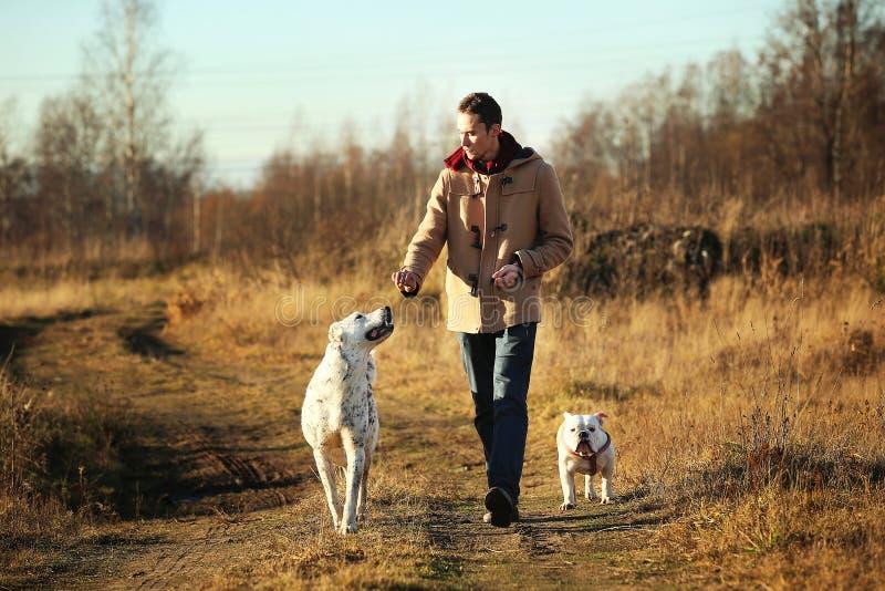 Het jonge gelukkige Europese glimlachen en het lachen lopen op een gebied met twee honden royalty-vrije stock afbeelding
