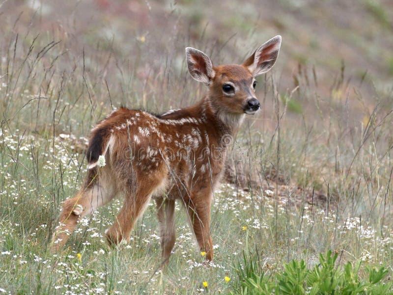 Het jonge herten stellen royalty-vrije stock afbeeldingen
