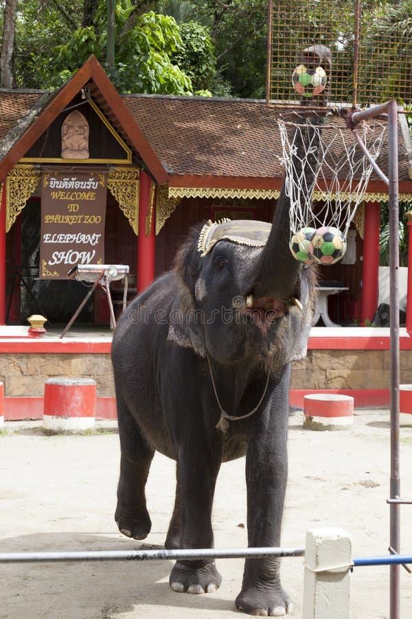 Het jonge Indische basketbal van de de spelenbal van de olifantsrots De olifant werpt de bal in de mand royalty-vrije stock foto
