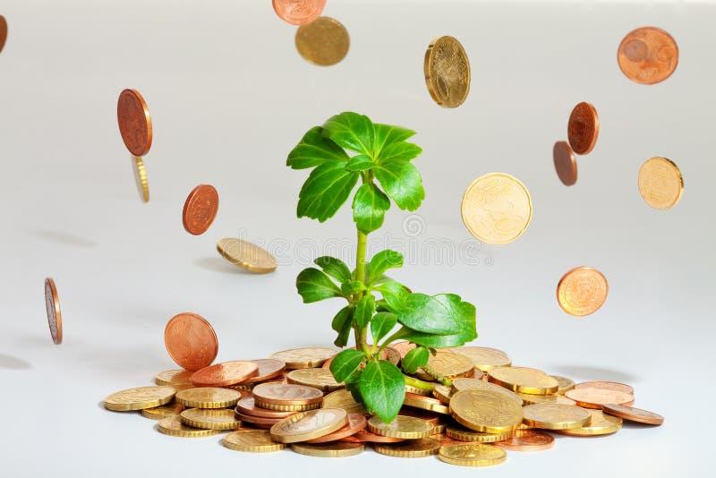 Het jonge installatie groeien op muntstukken stock afbeeldingen