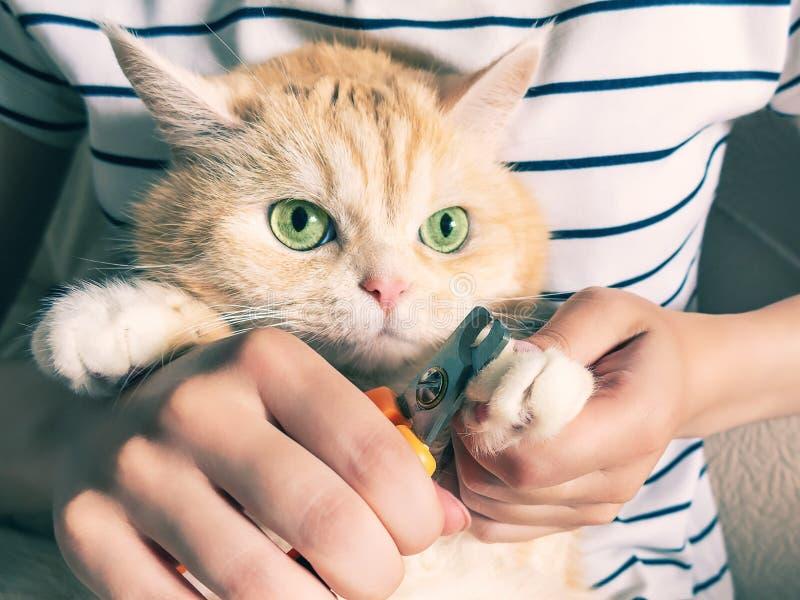 Het jonge meisje snijdt de klauwen van een mooi roomkatje met groene ogen royalty-vrije stock afbeeldingen