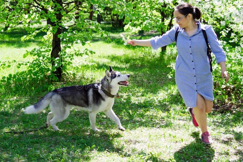 Het jonge meisje speelt met haar Schor hond in een tuin met bloeiende appelbomen stock foto's