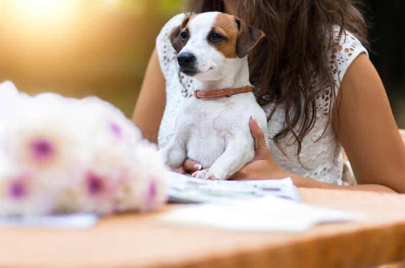 Het jonge, mooie meisje heeft een langverwachte gift - hond bre ontvangen royalty-vrije stock foto's