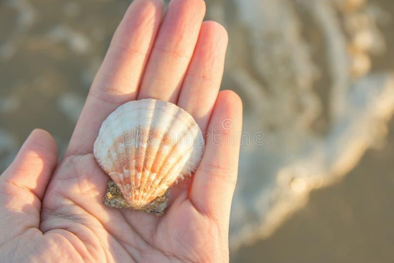 Het jonge Mooie Vlakke Ronde Overzees Shell van de Vrouwenholding ter beschikking Blauw Turkoois Water Gouden Zonlicht Als achter royalty-vrije stock afbeeldingen