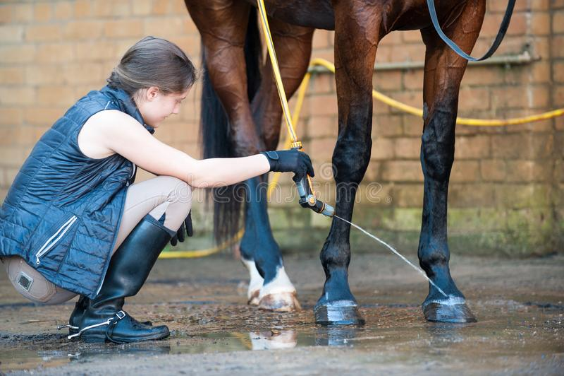 Het jonge paard van de tiener ruiterwas hoofs en benen stock foto's