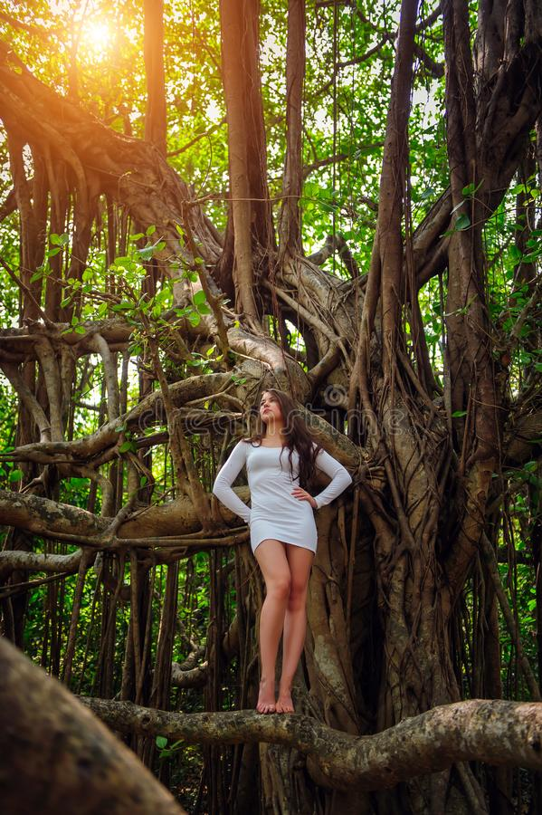 Het jonge sexy blootvoetse meisje in plotseling witte kleding stelt op grote banyan boom Donkerbruine tribunes met lange benen on stock afbeeldingen