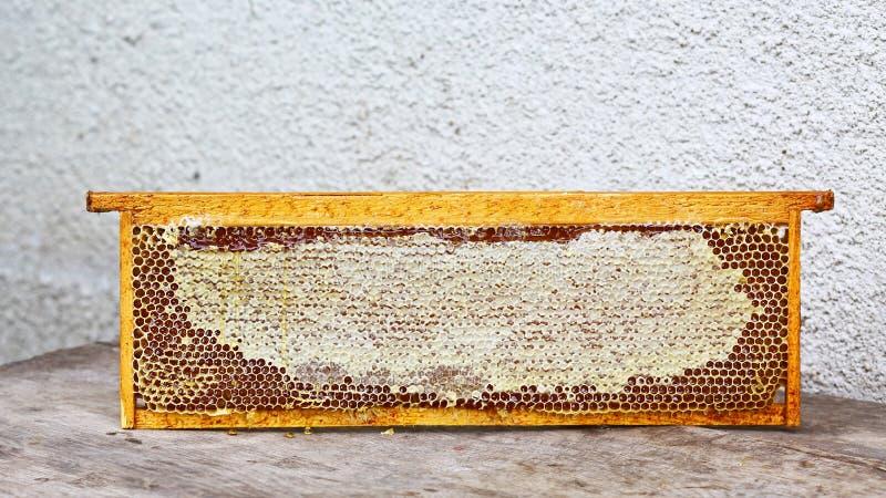 Het kader van de bijenstalbijenkorf met bijen zet structuurhoogtepunt van verse bijenhoning in in de was honingraten Geïsoleerde  stock afbeelding