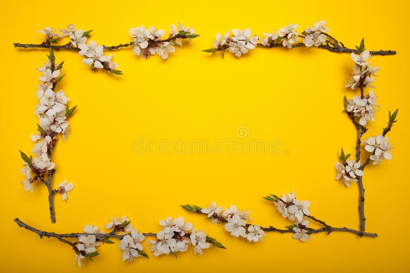 Het kader van het de lenteboeket van takken van een tot bloei komende boom op een gele achtergrond, minimalism vector illustratie