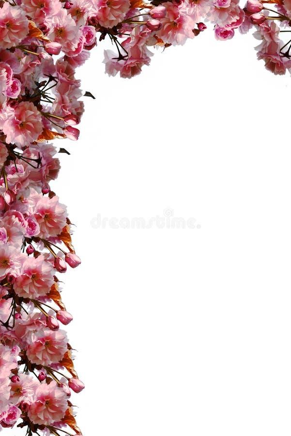 Het kader van de Sakurahoek stock foto's