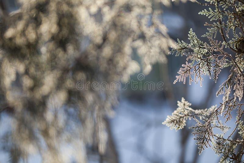Het kader van de winter Bevroren Bomen stock foto's