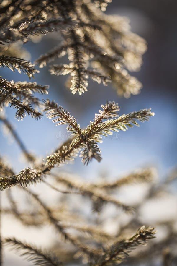 Het kader van de winter Bevroren Bomen stock afbeelding