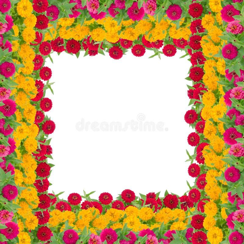 Het kader van de Zinniasbloem stock fotografie