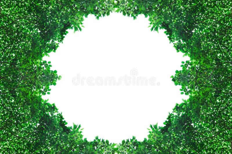 Het kader van groen doorbladert geïsoleerd op witte achtergrond met ruimte voor tekst stock afbeelding