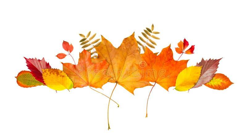 Het kadergrens van het de herfstblad Banner van bladeren en takken op witte achtergrond worden geïsoleerd die De herfstillustrati vector illustratie