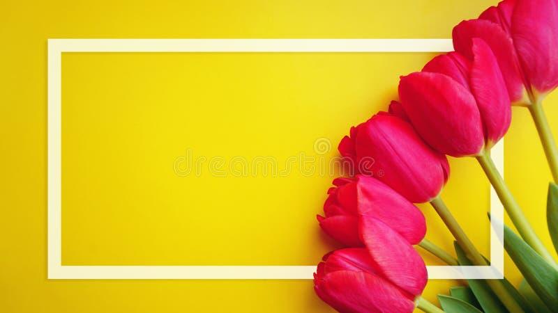 Het kaderkaart van tulpenbloemen Roze tulpen en wit kader op een gele achtergrond stock afbeelding