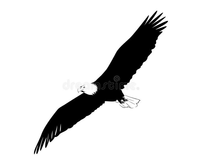 Het kale adelaar vliegen vector illustratie