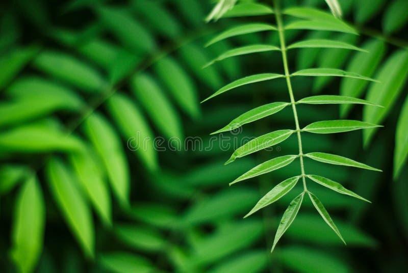 Het kalmeren van groene bladerenachtergrond, aardschoonheid stock foto