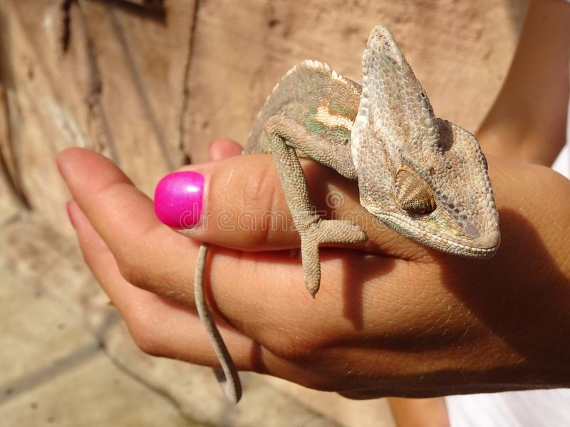 Het kameleon beklimt op een vrouwelijke hand royalty-vrije stock foto