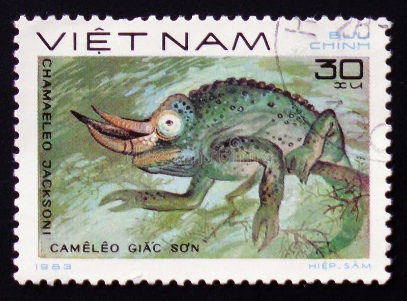 het Kameleon van hagedisjackson - Chamaeleo-jacksonii, zegel is van de reeks, circa 1983 royalty-vrije stock foto