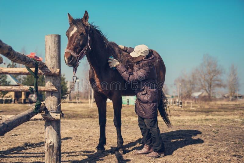 Het kammen van en het schoonmaken van het paard in de lente in het dorp royalty-vrije stock afbeelding