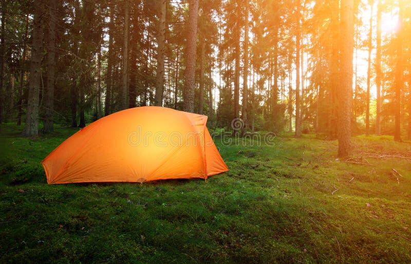 Het kamperen in het bos stock fotografie