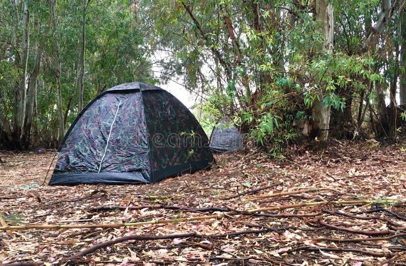 Het kamperen tent in het hout stock foto's