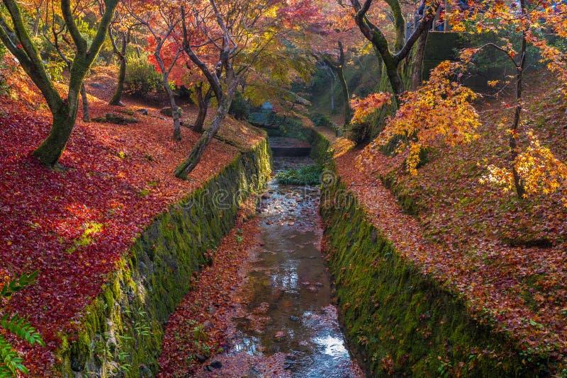 Het kanaal van de herfstbladeren in Tofukuji-tempel royalty-vrije stock foto's