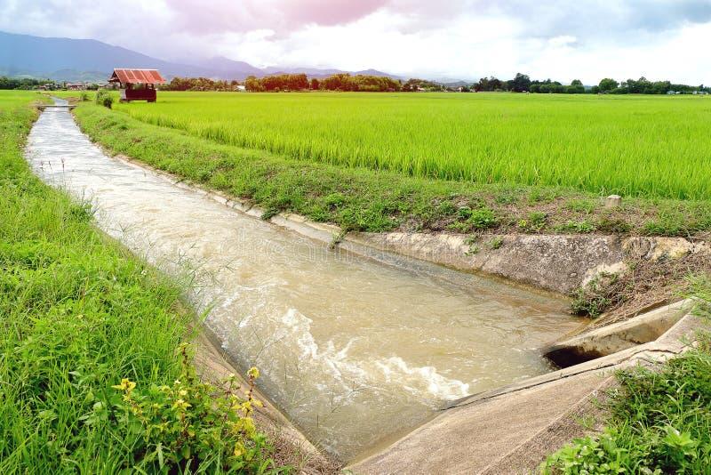Het kanaal van het irrigatiewater voor padiepadieveld royalty-vrije stock afbeeldingen