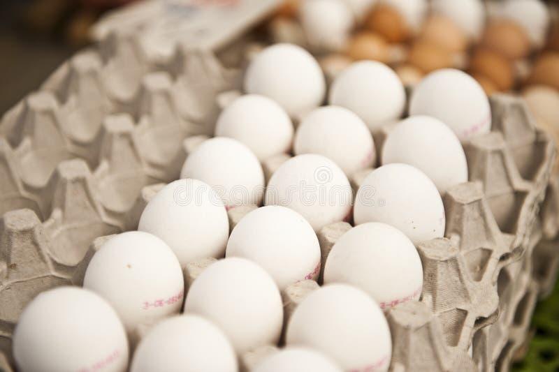 Het Karton van witte Eieren stock afbeeldingen