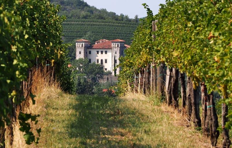 Het kasteel van Dobrovo in de afstand tussen twee rijen van wijngaarden Dobrovo is een belangrijk wijnbouwcentrum royalty-vrije stock afbeelding