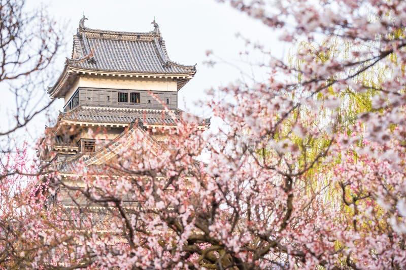 Het kasteel van Matsumoto met kersenbloesem royalty-vrije stock foto