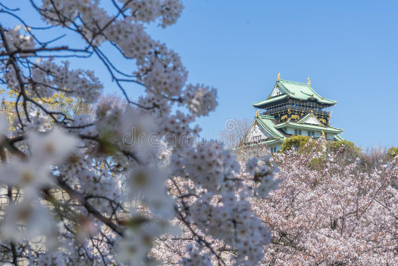 Het kasteel van Osaka met de kersenbloesems stock foto's