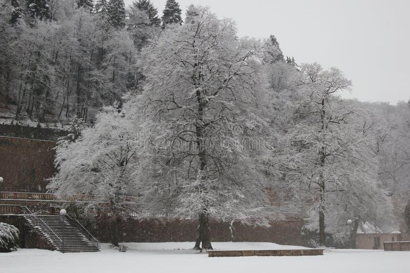 Het kasteeltuin van Heidelberg stock afbeeldingen
