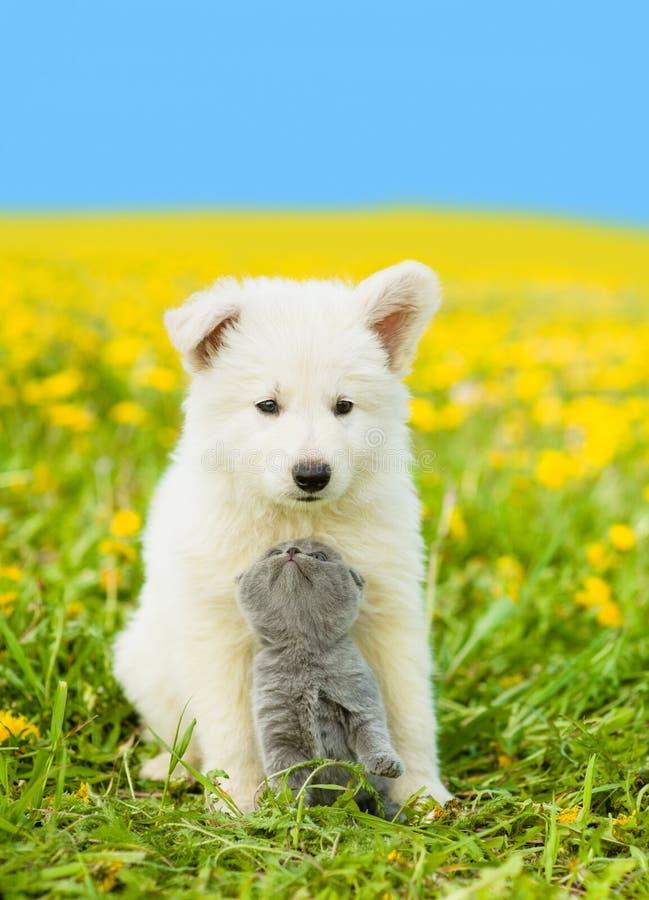 Het katje die een puppy bekijken, koesterde hem op paardebloemgebied royalty-vrije stock fotografie
